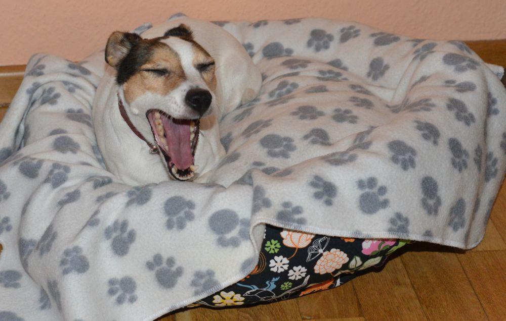 Hundebett Anleitung - tragmal